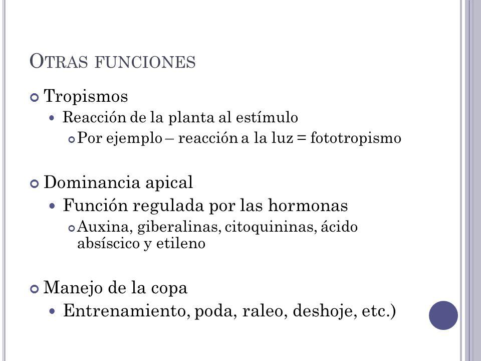 Otras funciones Tropismos Dominancia apical