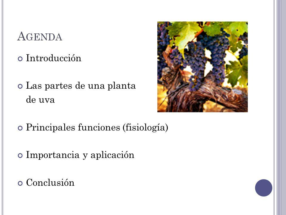 Agenda Introducción Las partes de una planta de uva