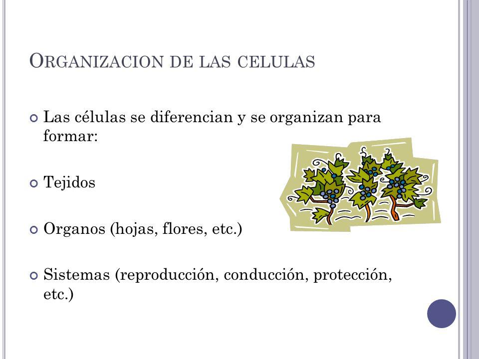 Organizacion de las celulas