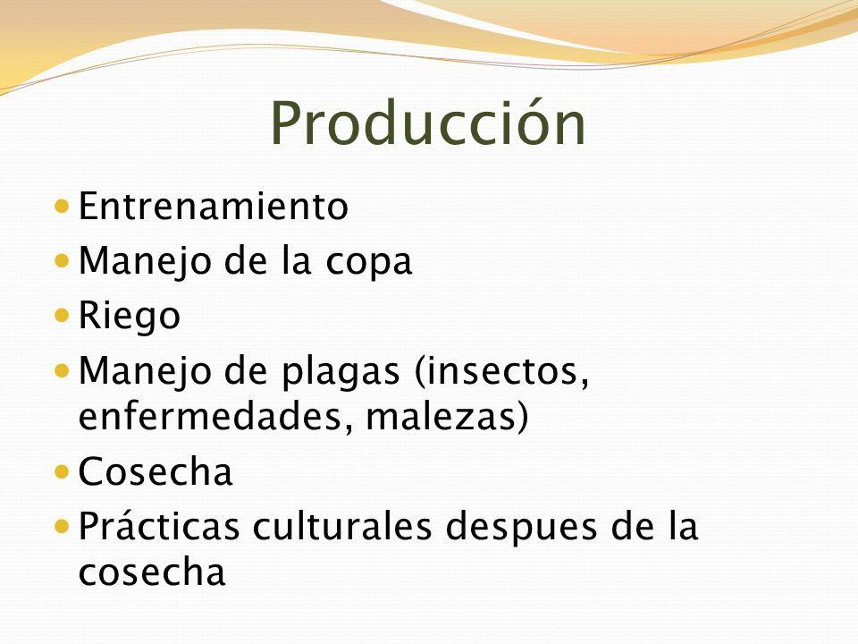 Producción Entrenamiento Manejo de la copa Riego