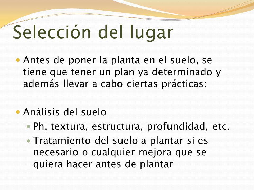 Selección del lugar Antes de poner la planta en el suelo, se tiene que tener un plan ya determinado y además llevar a cabo ciertas prácticas: