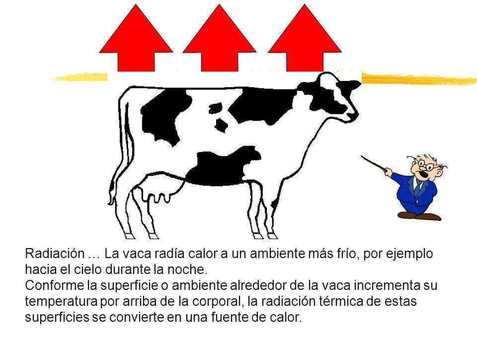 Radiación … La vaca radía calor a un ambiente más frío, por ejemplo hacia el cielo durante la noche.