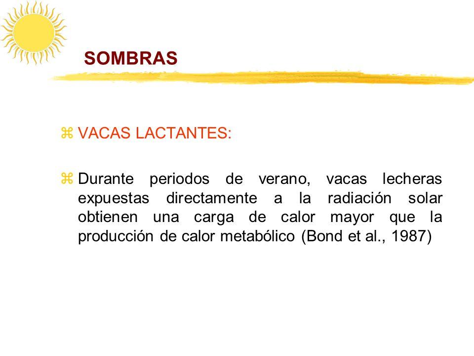 SOMBRAS VACAS LACTANTES: