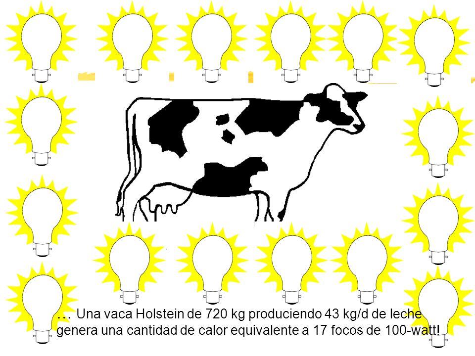 … Una vaca Holstein de 720 kg produciendo 43 kg/d de leche genera una cantidad de calor equivalente a 17 focos de 100-watt!