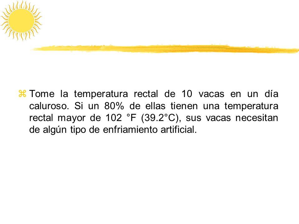 Tome la temperatura rectal de 10 vacas en un día caluroso