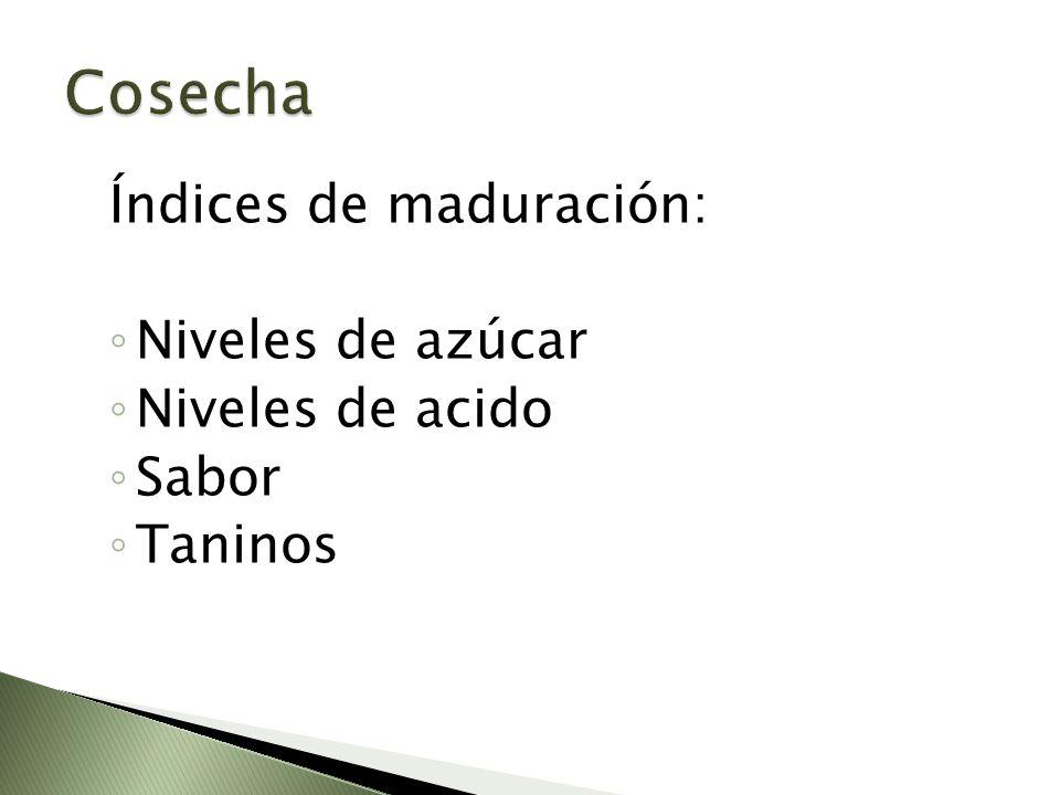 Cosecha Índices de maduración: Niveles de azúcar Niveles de acido