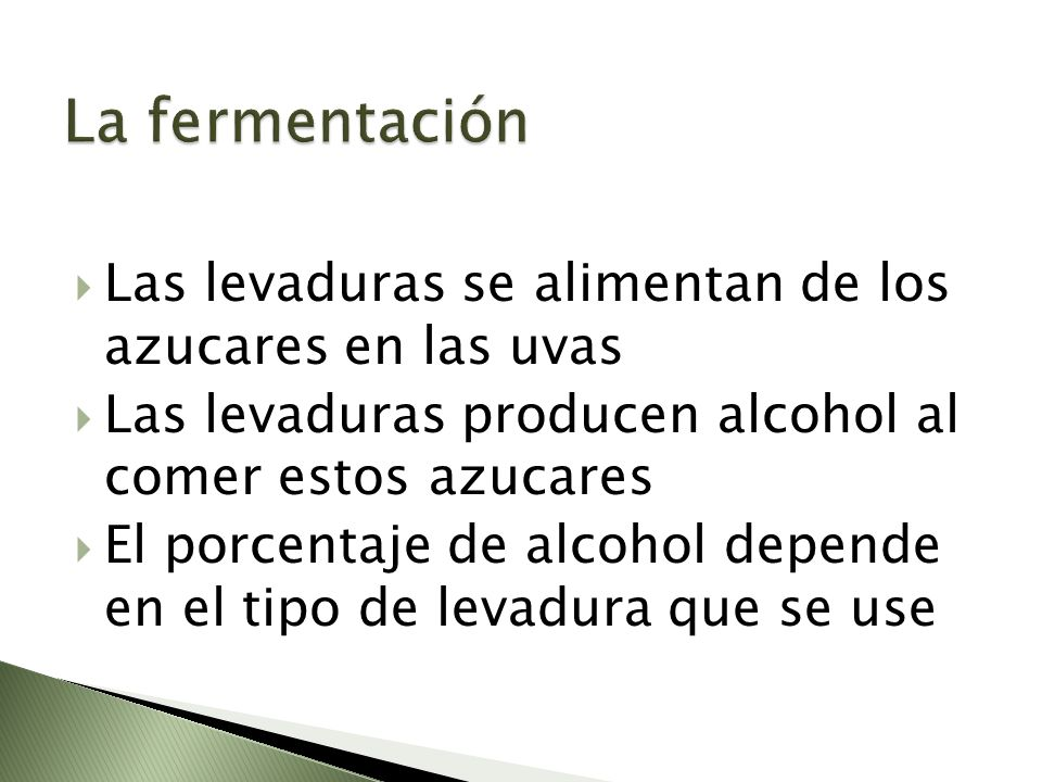 La fermentación Las levaduras se alimentan de los azucares en las uvas