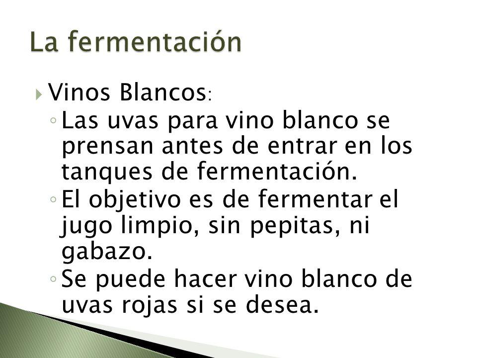 La fermentación Vinos Blancos: