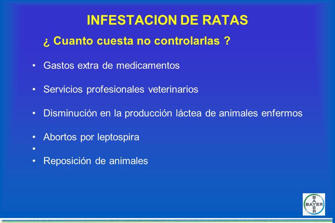 INFESTACION DE RATAS ¿ Cuanto cuesta no controlarlas