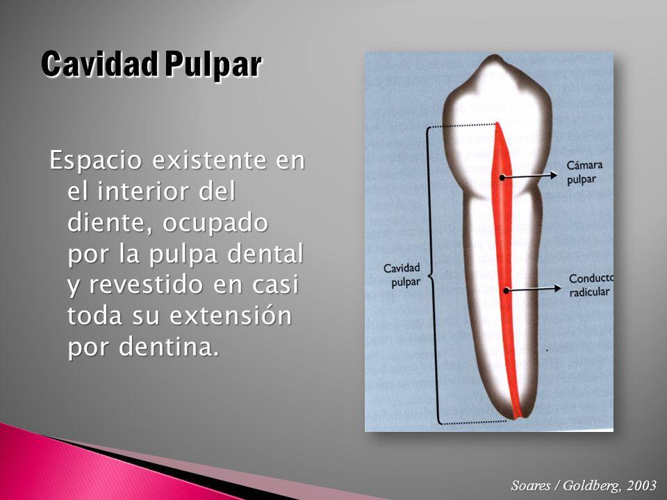 Vistoso Anatomía De La Pulpa Ornamento - Anatomía de Las Imágenesdel ...