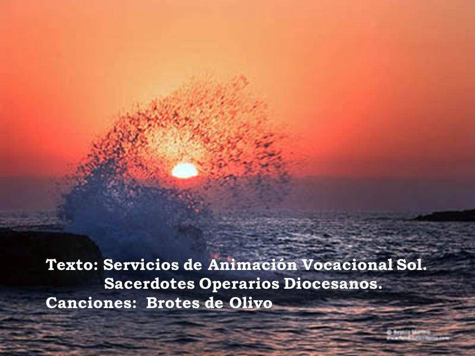 Texto: Servicios de Animación Vocacional Sol