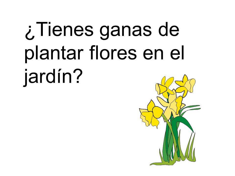 ¿Tienes ganas de plantar flores en el jardín