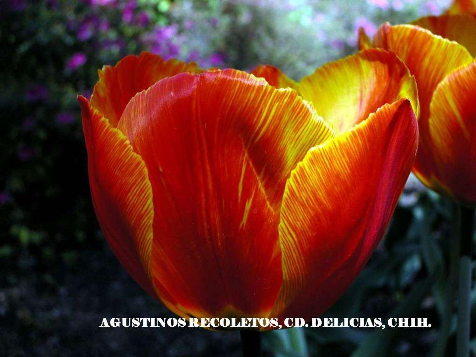 AGUSTINOS RECOLETOS, CD. DELICIAS, CHIH.