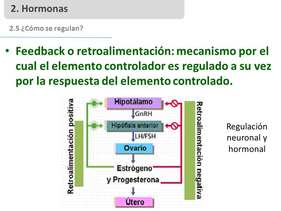 Regulación neuronal y hormonal