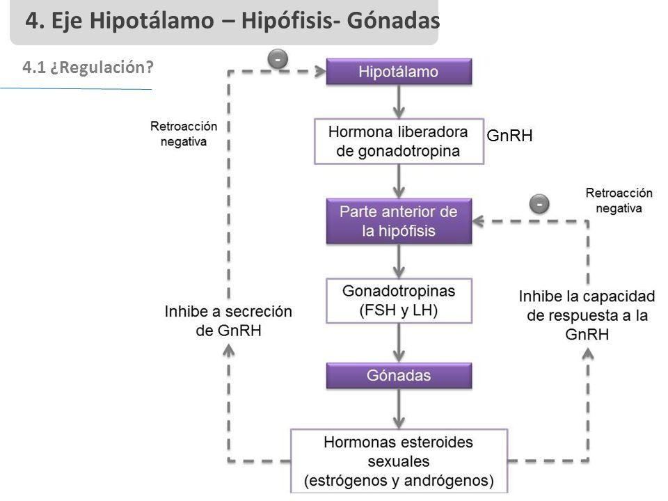 4. Eje Hipotálamo – Hipófisis- Gónadas