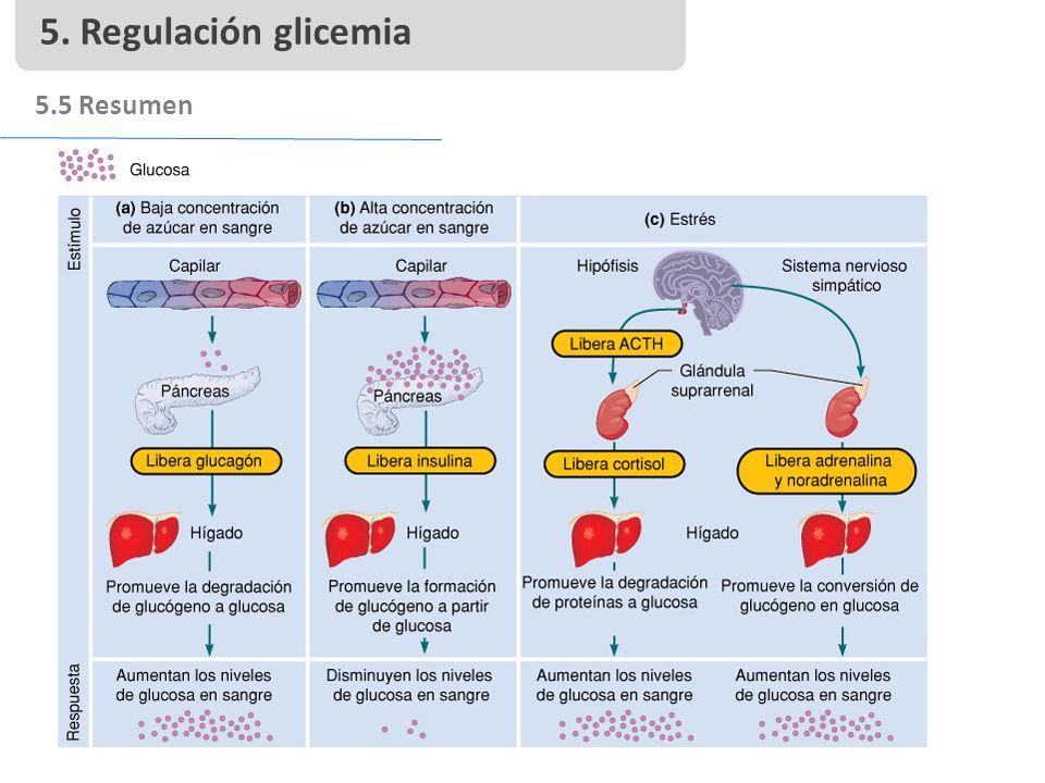 5. Regulación glicemia 5.5 Resumen