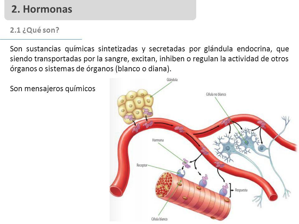 2. Hormonas 2.1 ¿Qué son