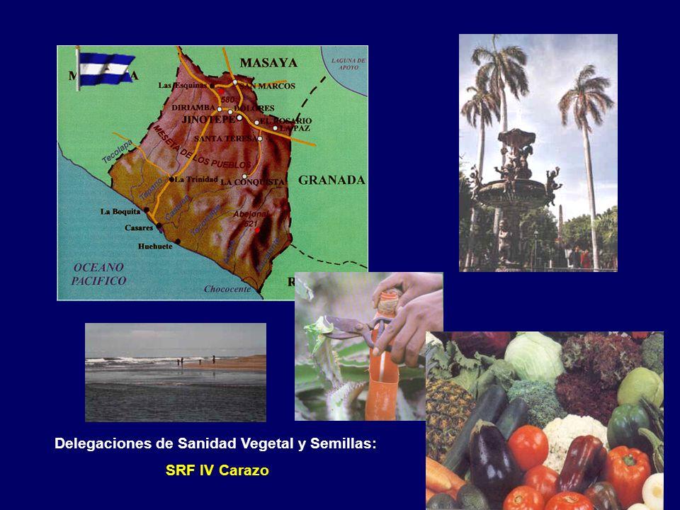 Delegaciones de Sanidad Vegetal y Semillas: