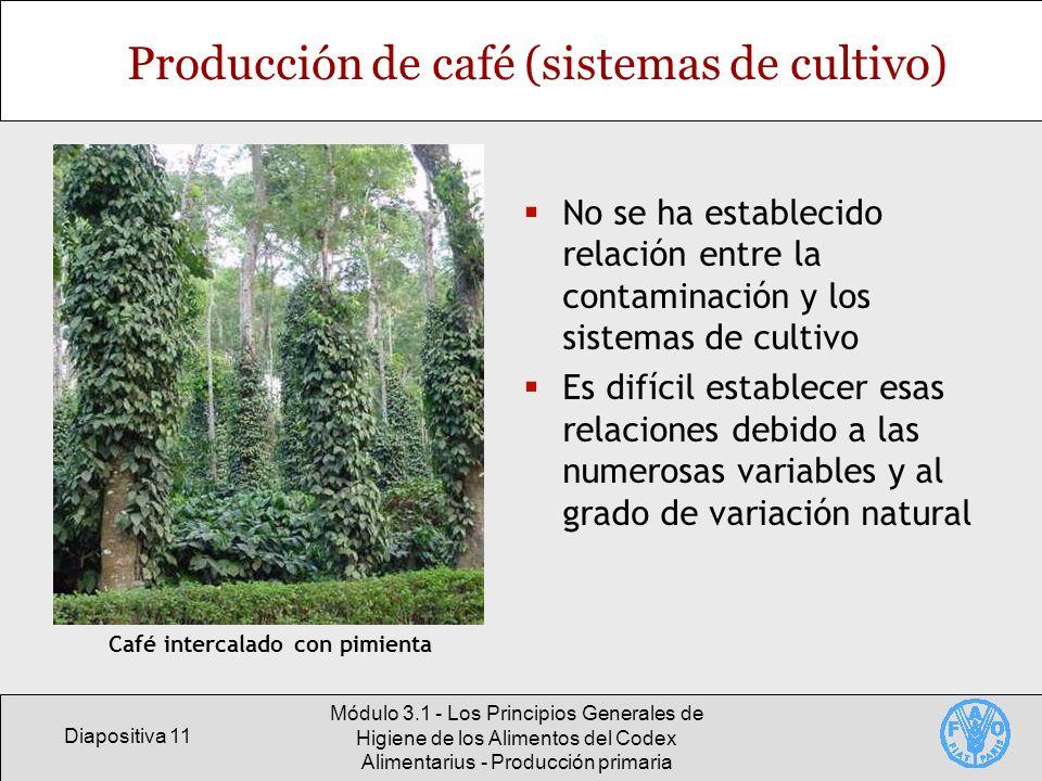 Producción de café (sistemas de cultivo)