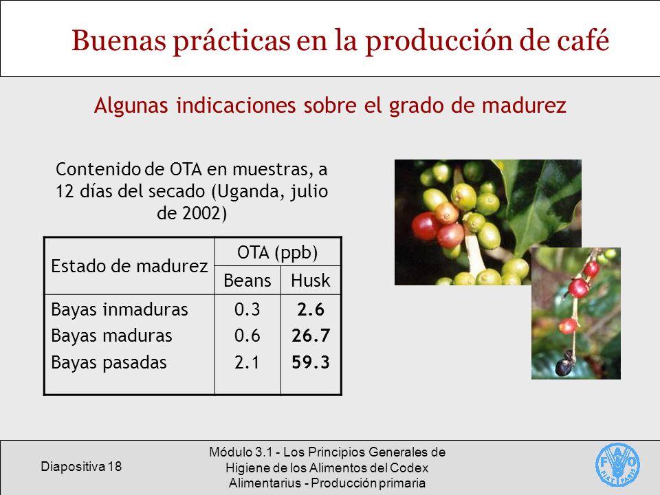 Buenas prácticas en la producción de café