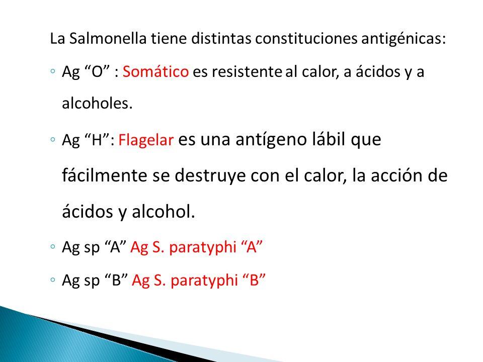 La Salmonella tiene distintas constituciones antigénicas: