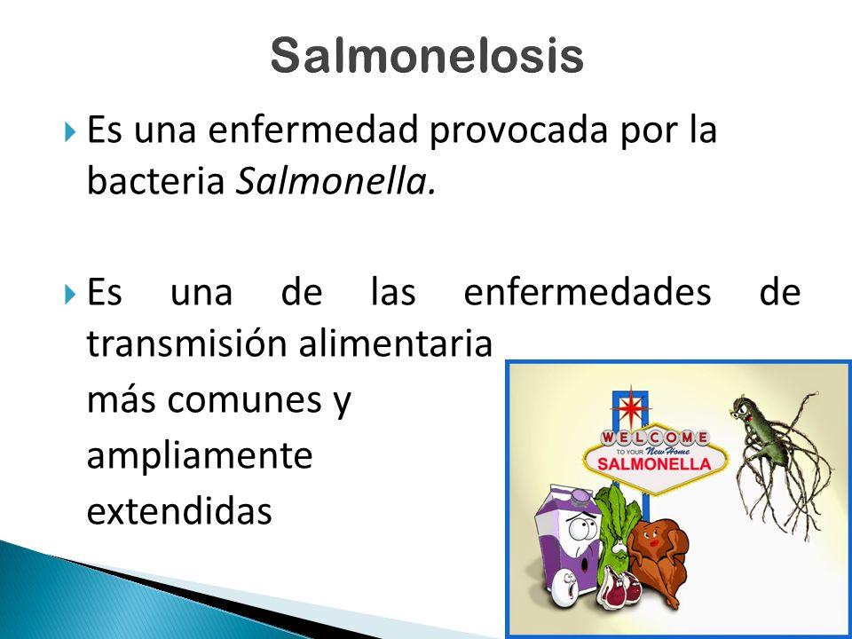 Salmonelosis Es una enfermedad provocada por la bacteria Salmonella.