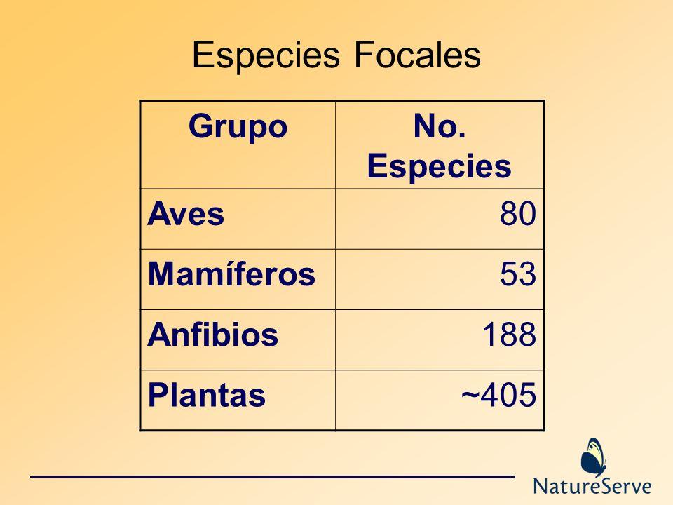 Especies Focales Grupo No. Especies Aves 80 Mamíferos 53 Anfibios 188