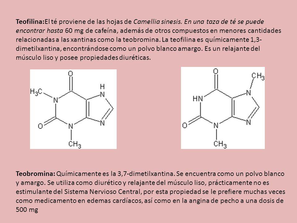 Teofilina:El té proviene de las hojas de Camellia sinesis