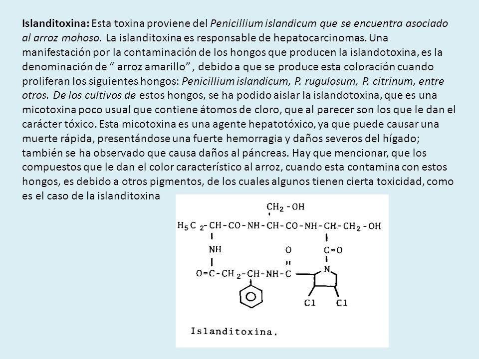 Islanditoxina: Esta toxina proviene del Penicillium islandicum que se encuentra asociado al arroz mohoso.