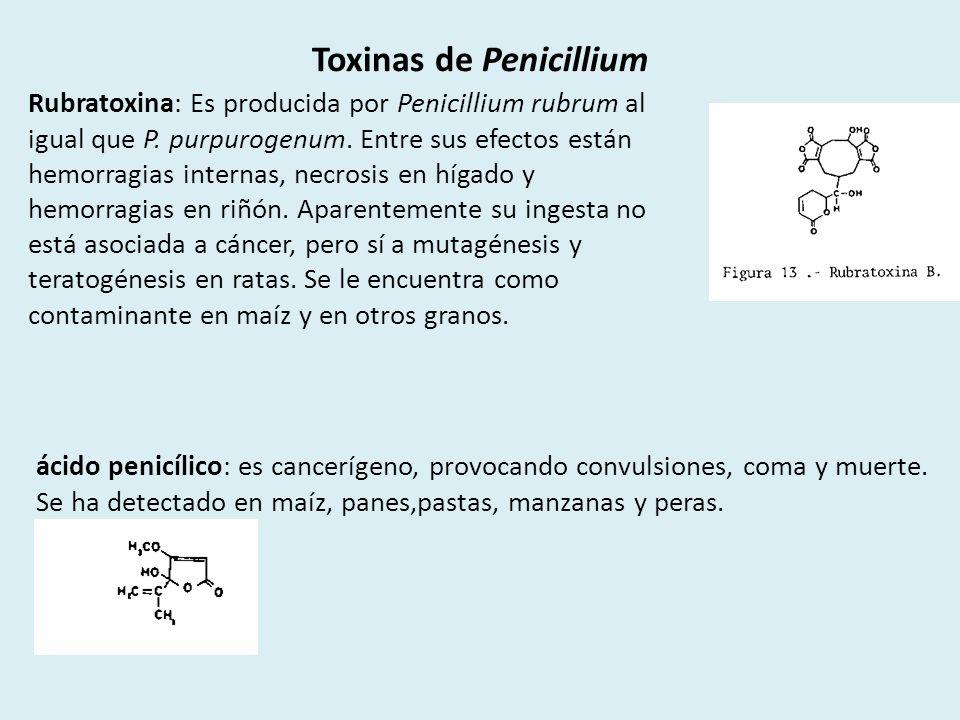 Toxinas de Penicillium