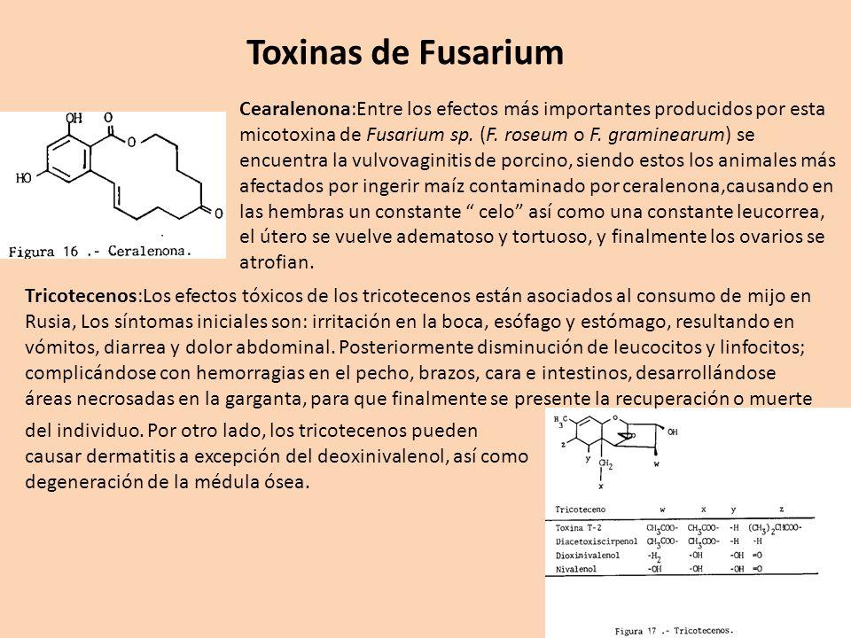 Toxinas de Fusarium