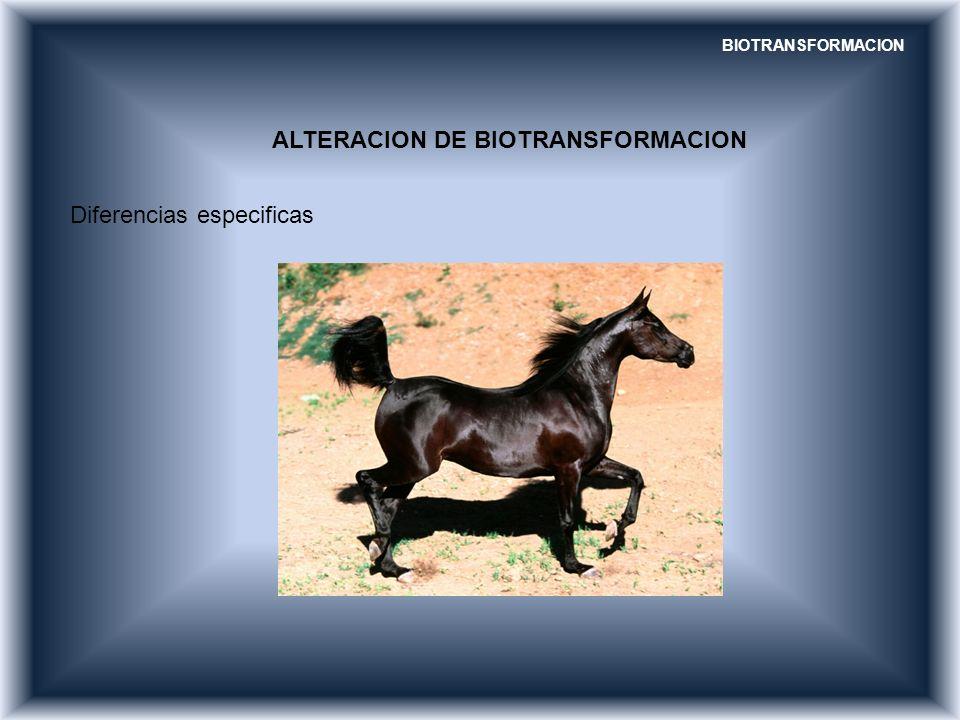 ALTERACION DE BIOTRANSFORMACION