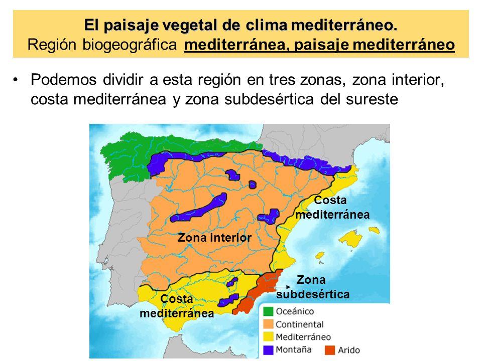 El paisaje vegetal de clima mediterr neo ppt video for Clima mediterraneo de interior