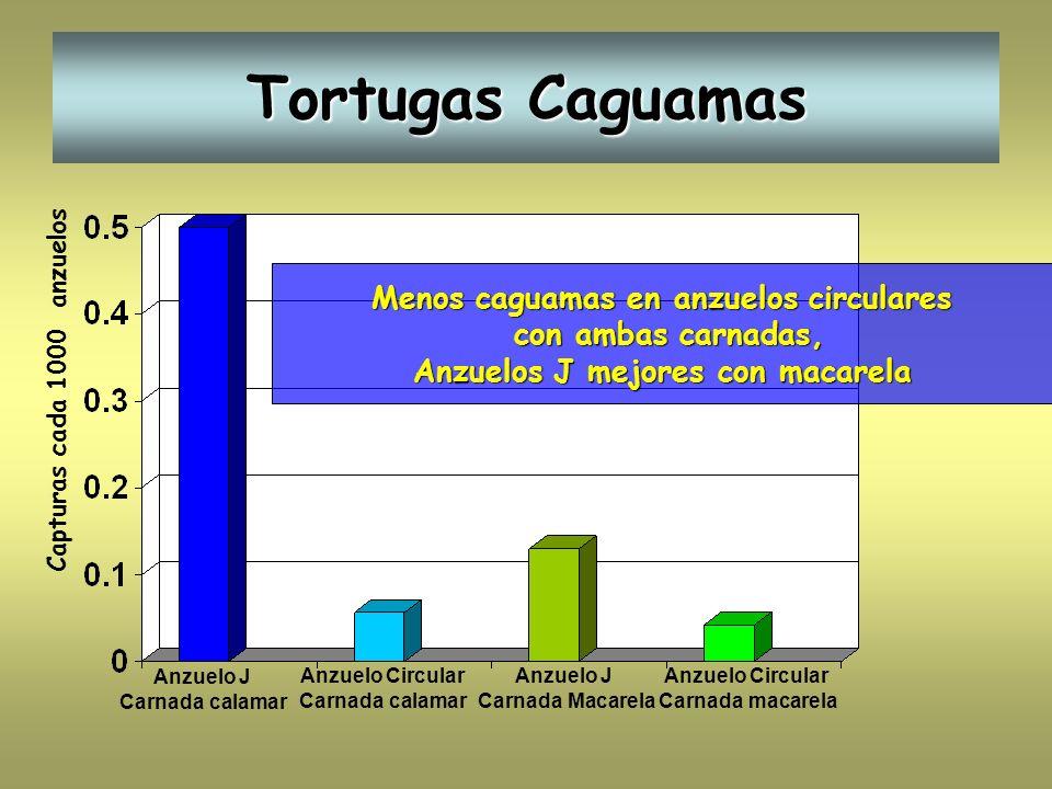 Menos caguamas en anzuelos circulares Anzuelos J mejores con macarela