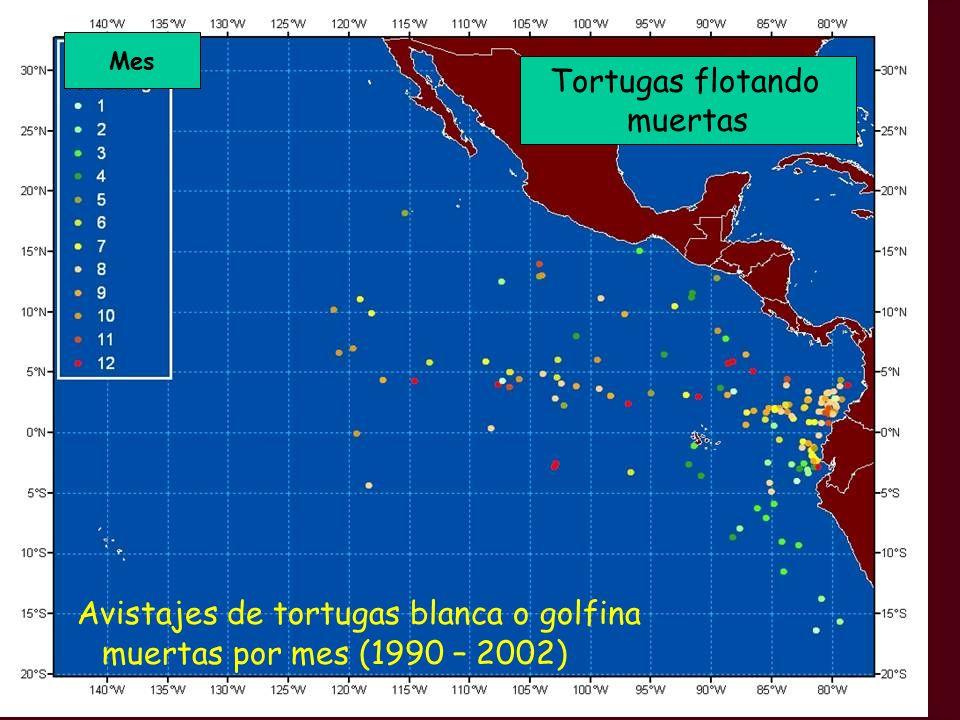Avistajes de tortugas blanca o golfina muertas por mes (1990 – 2002)