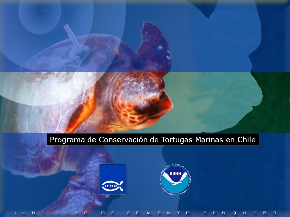 Programa de Conservación de Tortugas Marinas en Chile