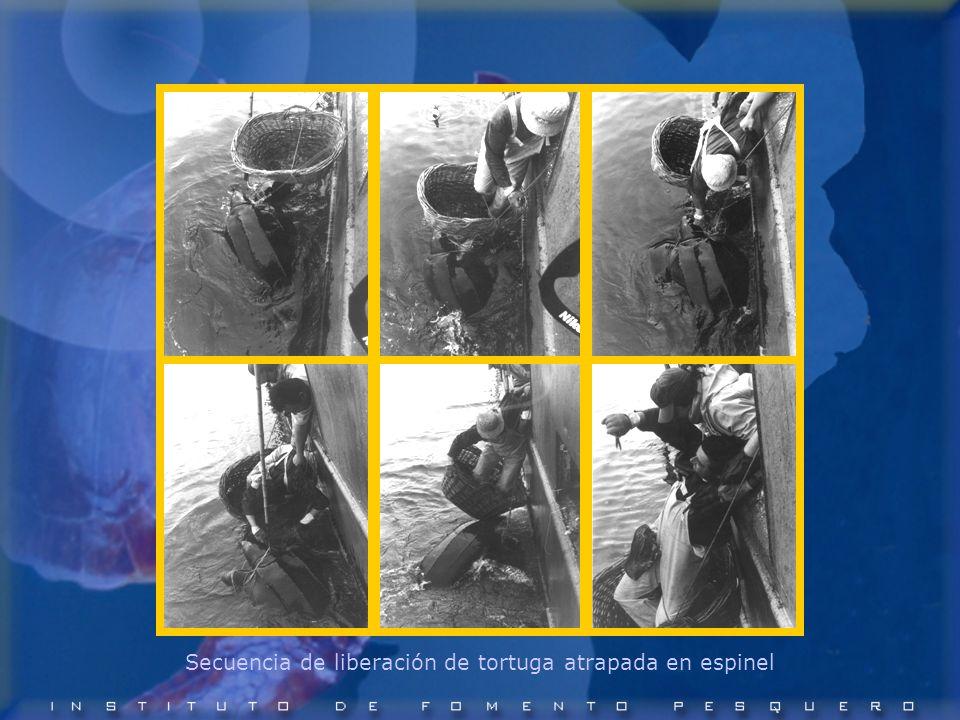 Secuencia de liberación de tortuga atrapada en espinel
