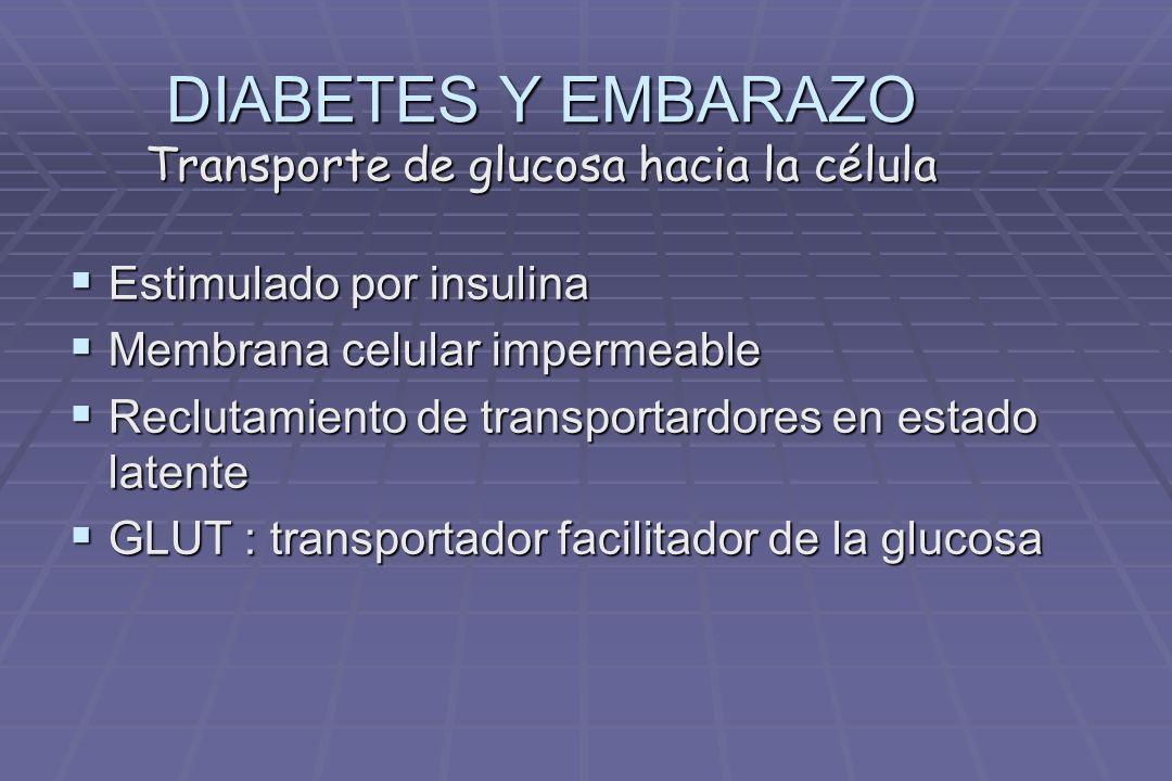 DIABETES Y EMBARAZO Dr. Jorge Arturo Mora Sandí - ppt