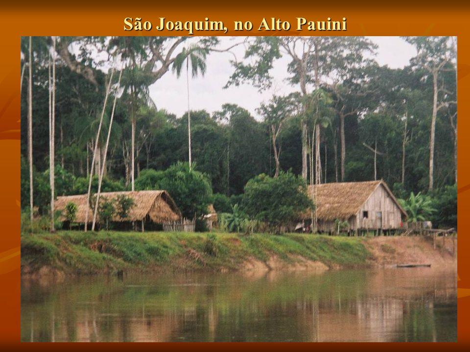 São Joaquim, no Alto Pauini