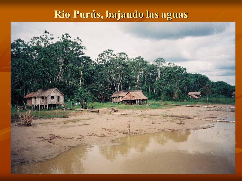Rio Purús, bajando las aguas