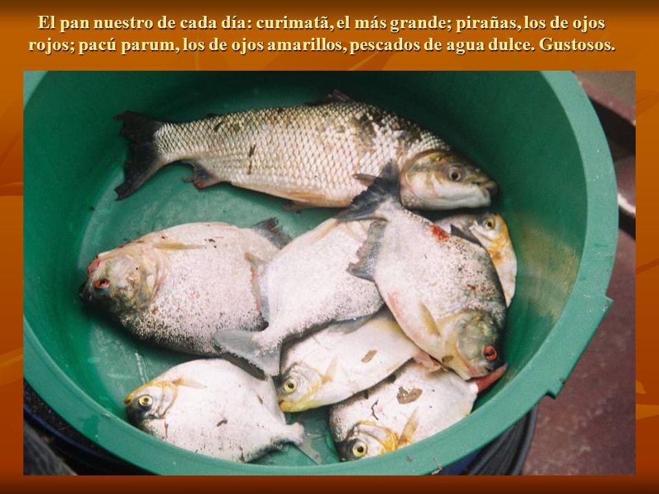 El pan nuestro de cada día: curimatã, el más grande; pirañas, los de ojos rojos; pacú parum, los de ojos amarillos, pescados de agua dulce.