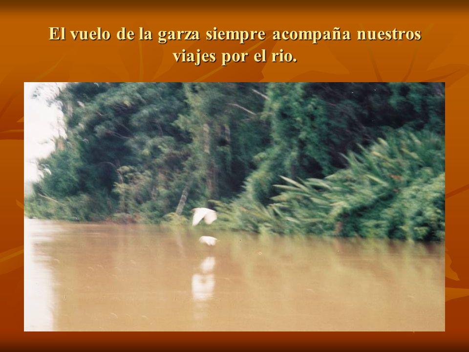 El vuelo de la garza siempre acompaña nuestros viajes por el rio.