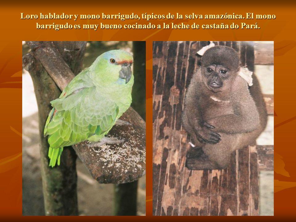 Loro hablador y mono barrigudo, típicos de la selva amazónica