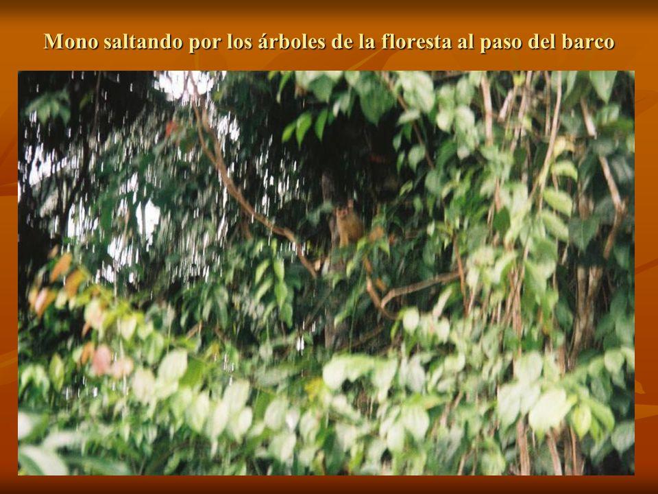 Mono saltando por los árboles de la floresta al paso del barco