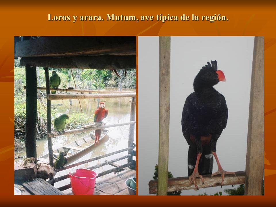 Loros y arara. Mutum, ave típica de la región.