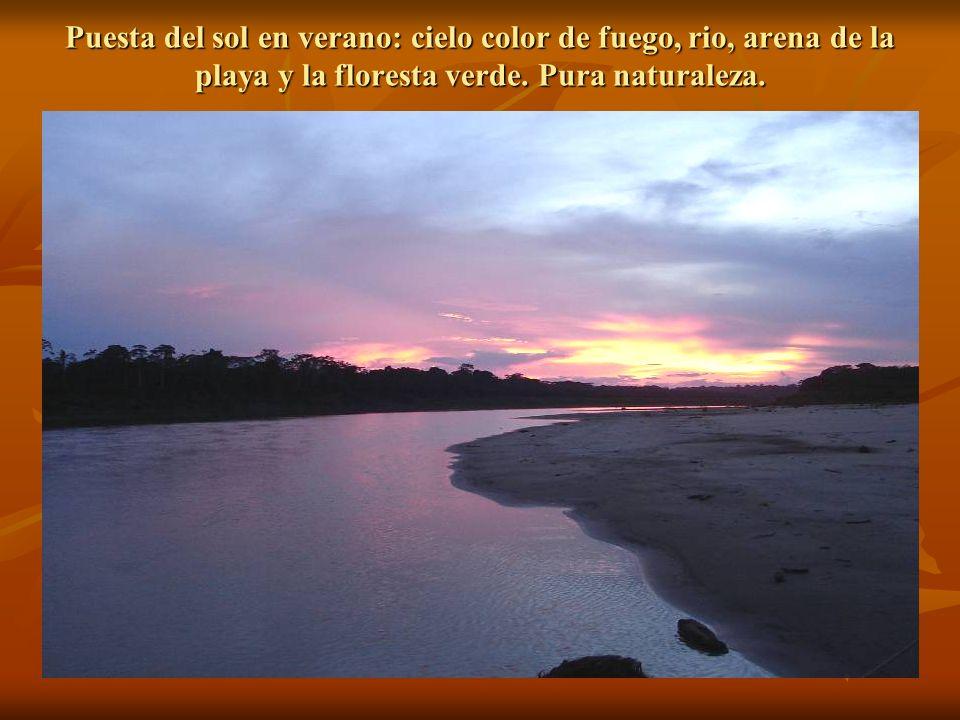 Puesta del sol en verano: cielo color de fuego, rio, arena de la playa y la floresta verde.