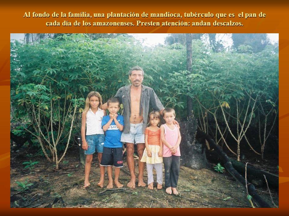 Al fondo de la família, una plantación de mandioca, tubérculo que es el pan de cada día de los amazonenses.