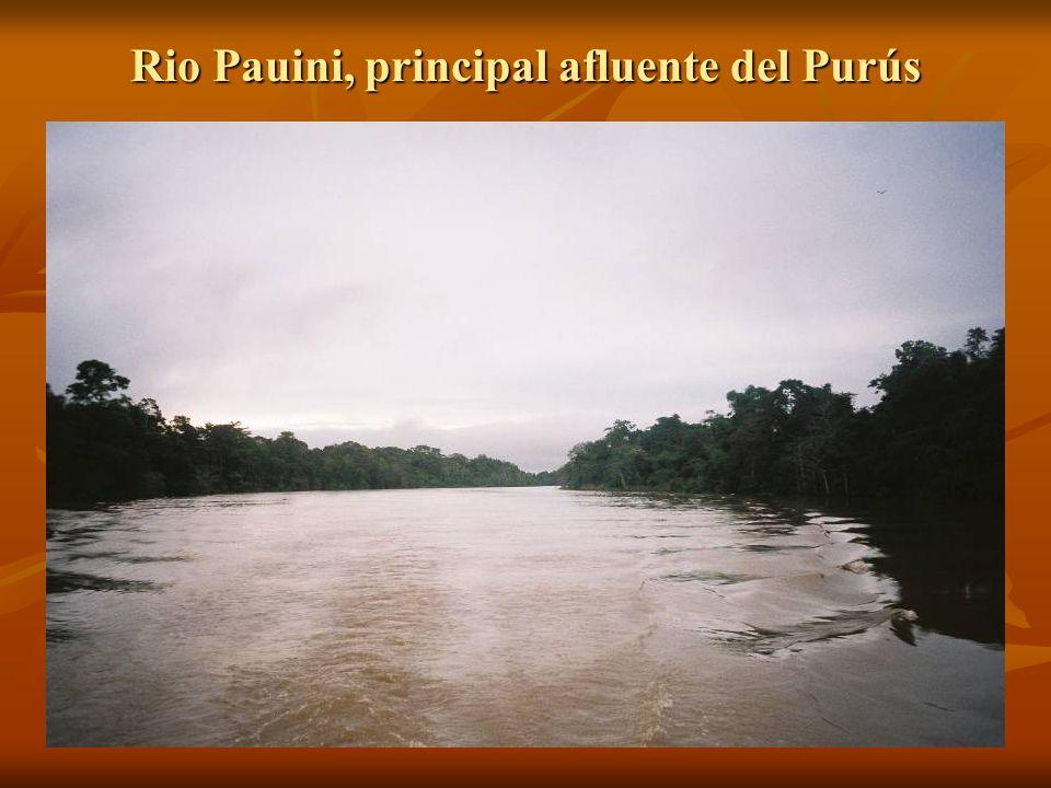 Rio Pauini, principal afluente del Purús