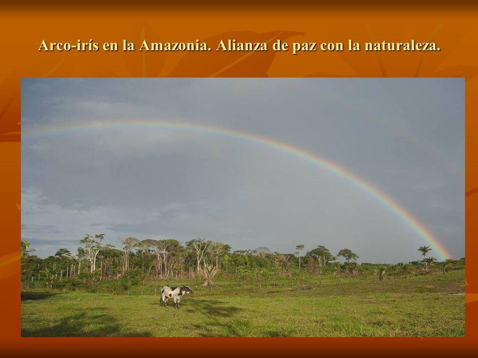 Arco-irís en la Amazonia. Alianza de paz con la naturaleza.
