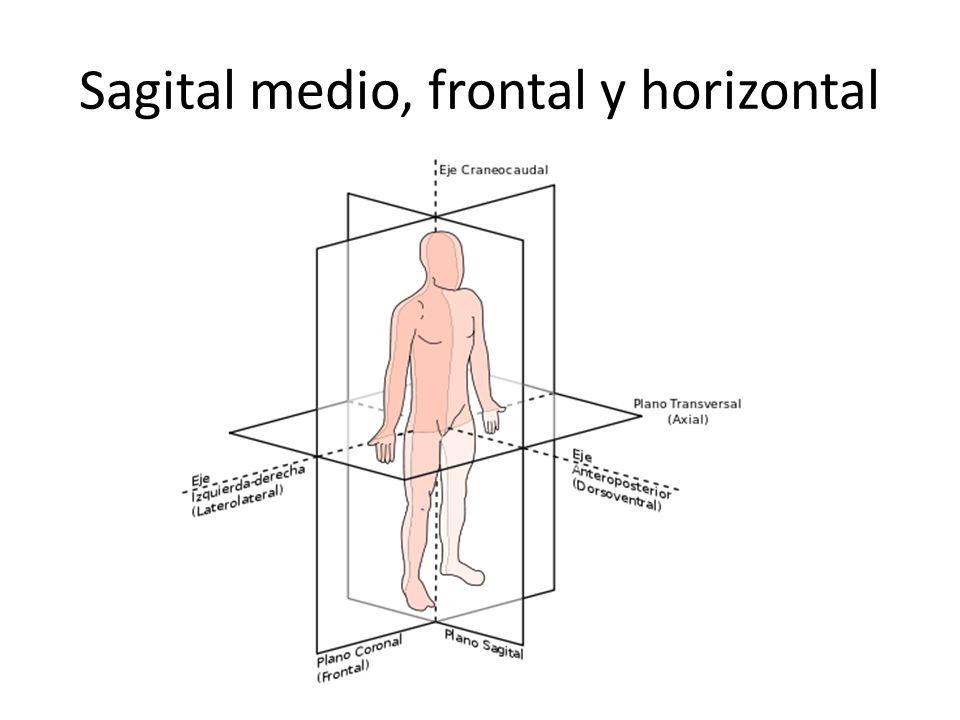 Sagital medio, frontal y horizontal